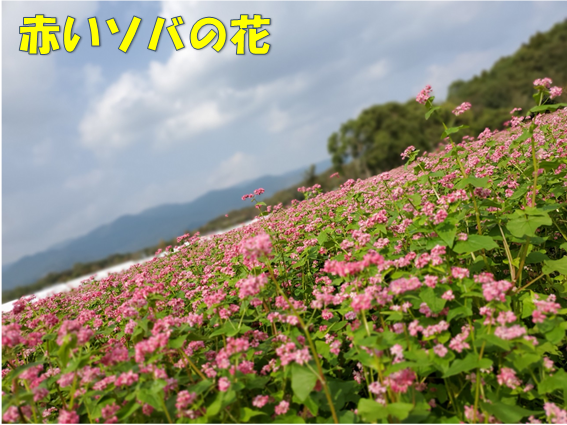 f:id:wanwankazoku:20191206210314p:plain