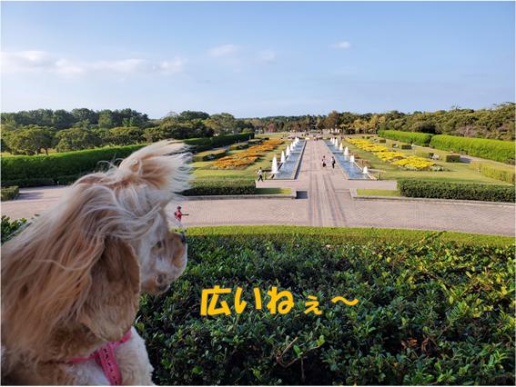 f:id:wanwankazoku:20191207120515p:plain