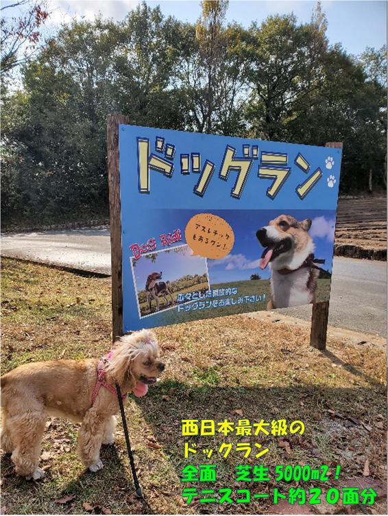 f:id:wanwankazoku:20191221234822p:plain