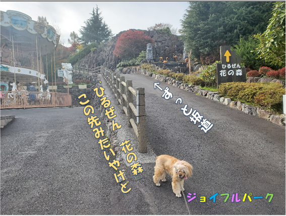 f:id:wanwankazoku:20191222200519p:plain