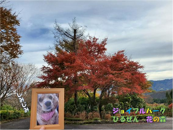 f:id:wanwankazoku:20191222201017p:plain