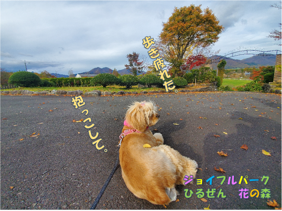 f:id:wanwankazoku:20191222201418p:plain