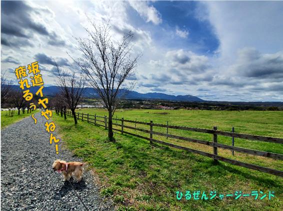 f:id:wanwankazoku:20191222233319p:plain