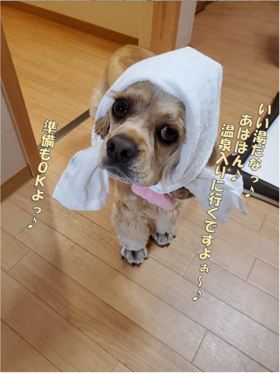 f:id:wanwankazoku:20191229194548p:plain