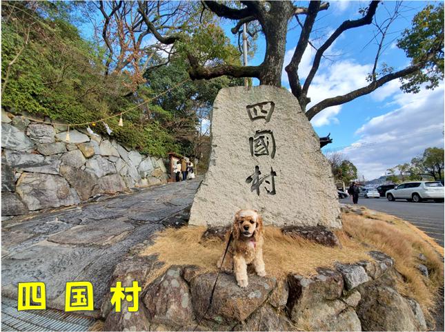 f:id:wanwankazoku:20200105211040p:plain