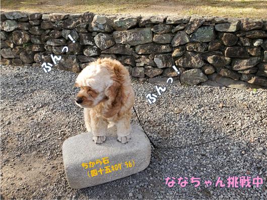 f:id:wanwankazoku:20200105213648p:plain