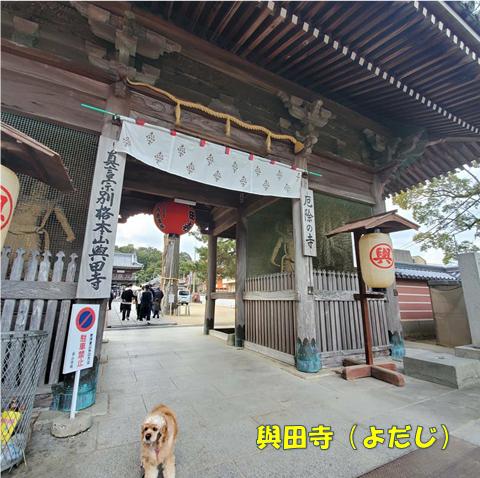 f:id:wanwankazoku:20200113213258p:plain