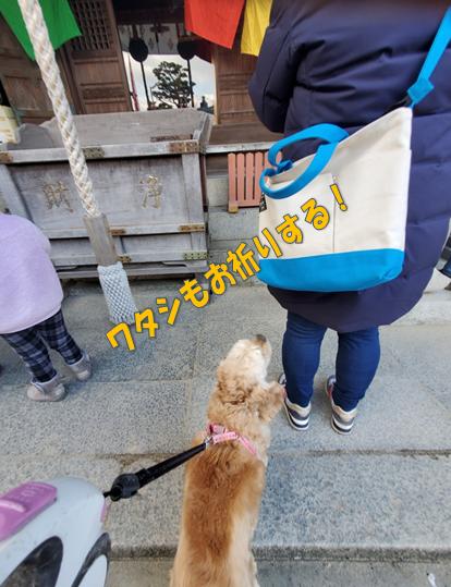 f:id:wanwankazoku:20200113224657p:plain