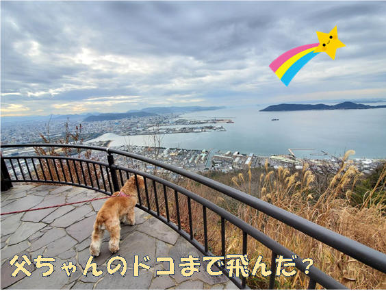 f:id:wanwankazoku:20200120204250p:plain
