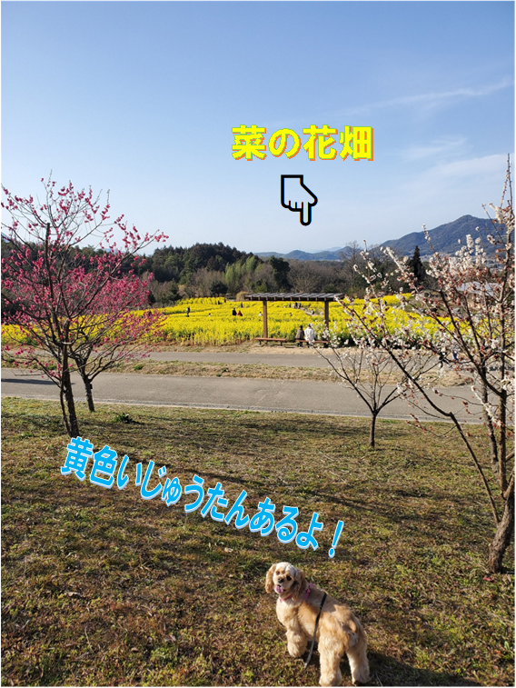 f:id:wanwankazoku:20200224201021p:plain
