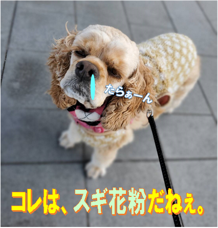 f:id:wanwankazoku:20200305214804p:plain