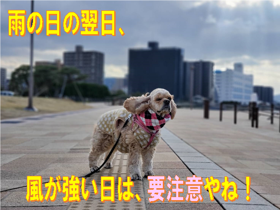 f:id:wanwankazoku:20200305214922p:plain