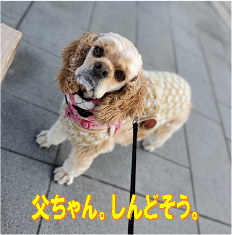 f:id:wanwankazoku:20200305215001p:plain