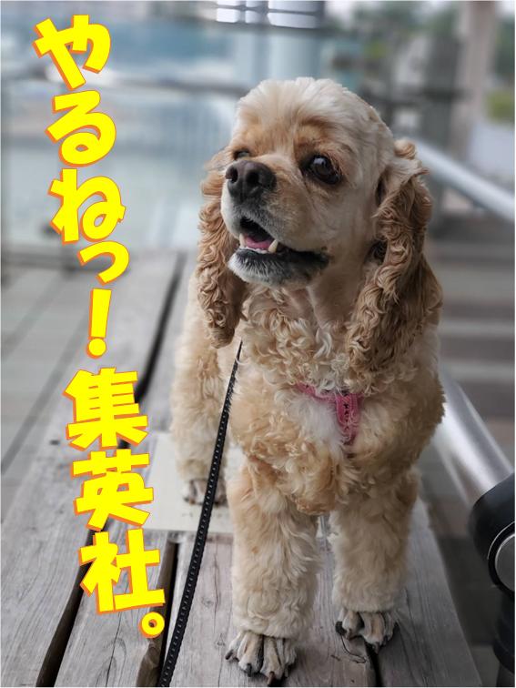 f:id:wanwankazoku:20200308205503p:plain