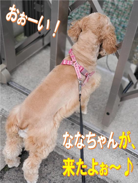 f:id:wanwankazoku:20200311212902p:plain