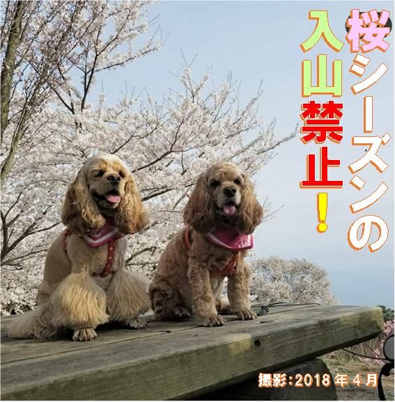 f:id:wanwankazoku:20200315202507p:plain