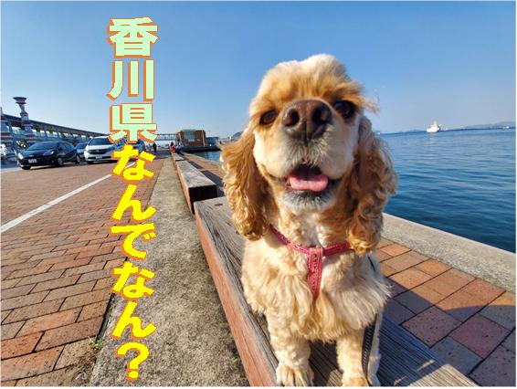 f:id:wanwankazoku:20200318000528p:plain