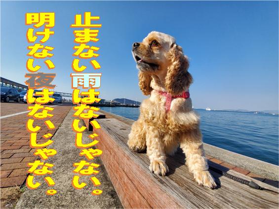 f:id:wanwankazoku:20200318002749p:plain