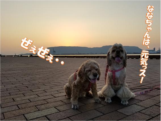 f:id:wanwankazoku:20200320205535p:plain