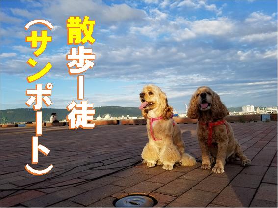 f:id:wanwankazoku:20200322164357p:plain