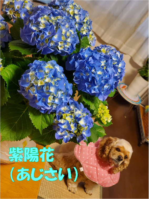f:id:wanwankazoku:20200401194749p:plain