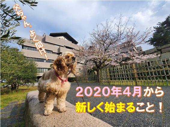 f:id:wanwankazoku:20200404203434p:plain