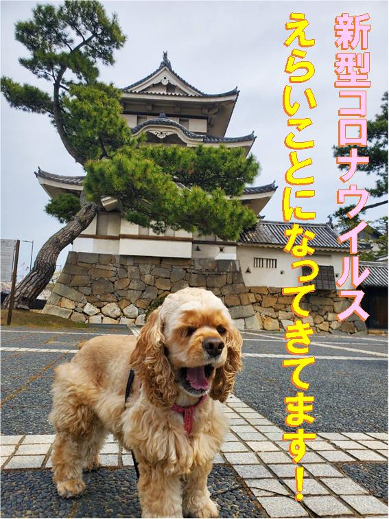 f:id:wanwankazoku:20200411185019p:plain