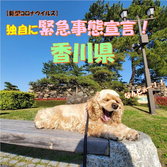 f:id:wanwankazoku:20200415204551p:plain