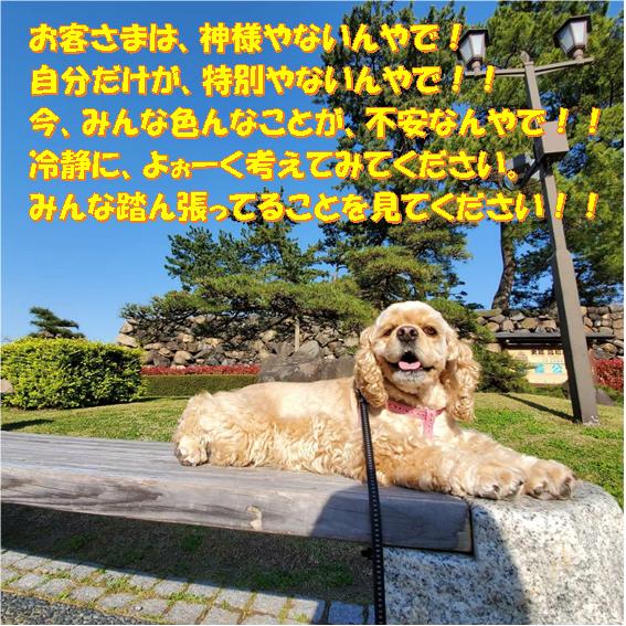 f:id:wanwankazoku:20200415211928p:plain