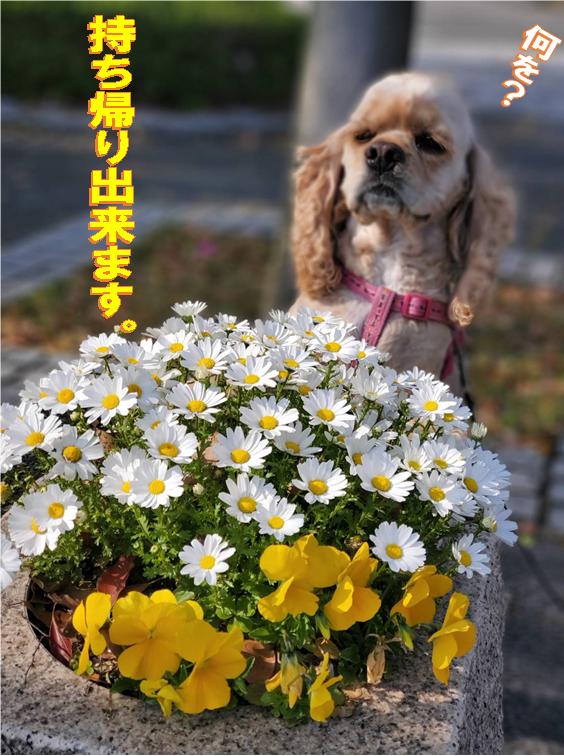 f:id:wanwankazoku:20200419183341p:plain