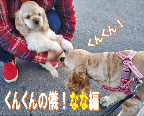 f:id:wanwankazoku:20200525233500p:plain