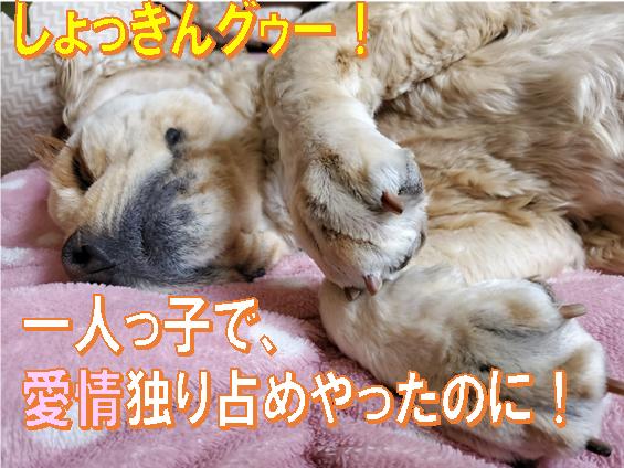 f:id:wanwankazoku:20200531200505p:plain