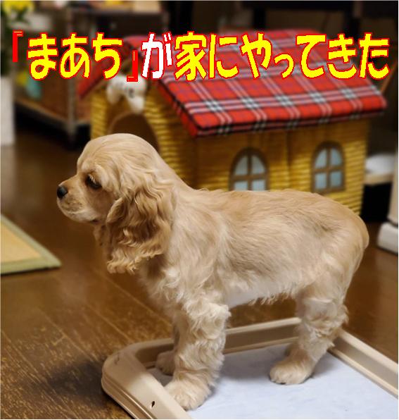 f:id:wanwankazoku:20200602133843p:plain