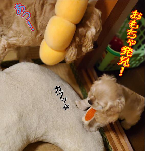 f:id:wanwankazoku:20200602135009p:plain