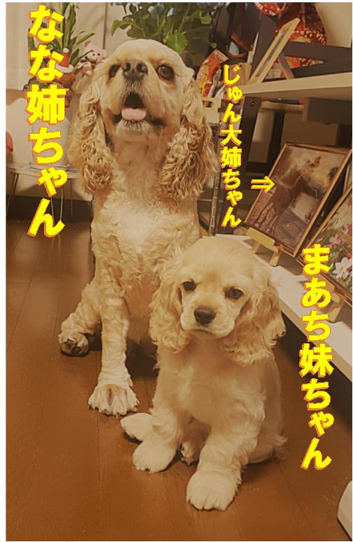 f:id:wanwankazoku:20200608222641p:plain
