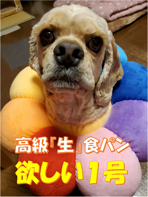 f:id:wanwankazoku:20200613185714p:plain
