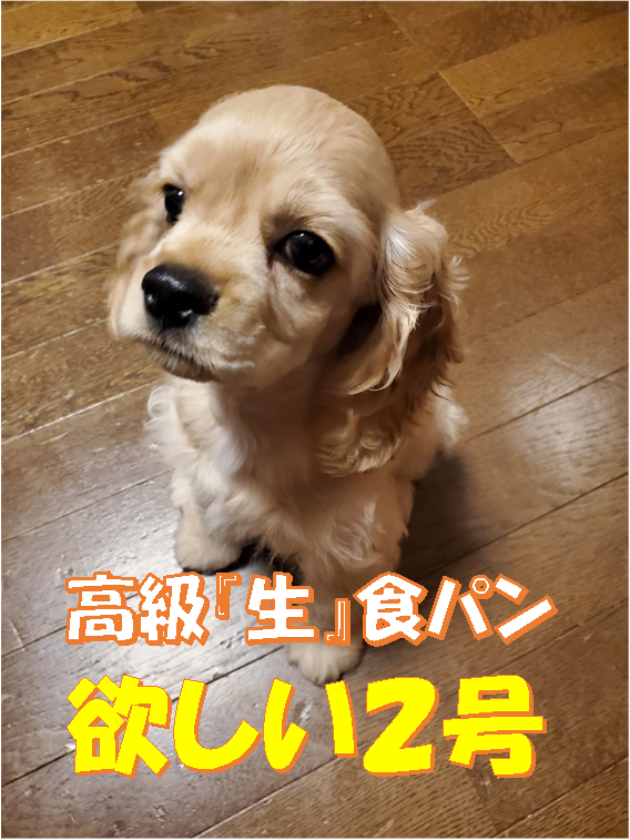 f:id:wanwankazoku:20200613185803p:plain