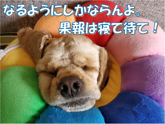 f:id:wanwankazoku:20200614203205p:plain