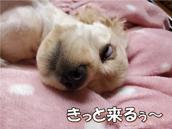 f:id:wanwankazoku:20200621212633p:plain
