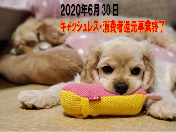 f:id:wanwankazoku:20200630210051p:plain