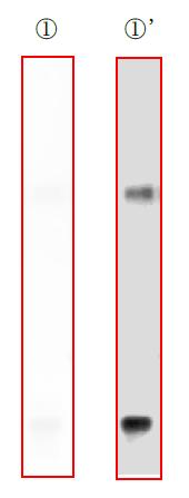 f:id:warbler:20170807123704p:plain