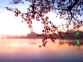 紅葉と朝焼けの濃霧