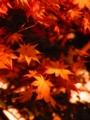 朝は紅葉が綺麗に見えるね