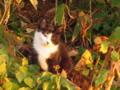 野良猫を連写モード(画質落ちる)で撮ってみた