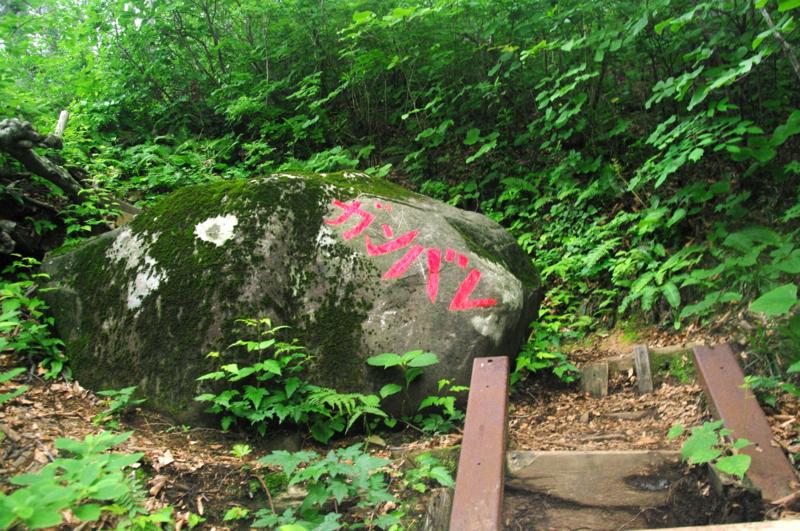 f:id:wasakoki7778:20160622122947j:image