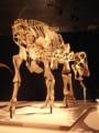 [恐竜]ニジェールサウルス