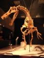 [恐竜]アンガトラマ