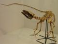 [恐竜]サンタナラプトル