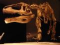 [恐竜]メガラプトル