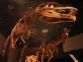 [恐竜]マプサウルス(成体と幼体)